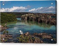 Darwin Bay     Genovesa Island      Galapagos Islands Acrylic Print