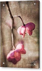 Das Pfaffenhuetchen - Spindle Tree Acrylic Print