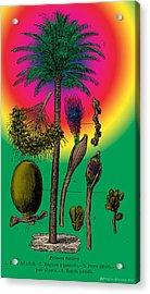 Date Palm Acrylic Print by Eric Edelman