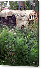 David Brown Grown Acrylic Print by Jez C Self