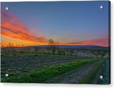 Dawn At Roe Orchards I Acrylic Print by Angelo Marcialis