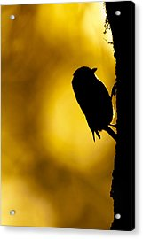 Dawn Climber Acrylic Print