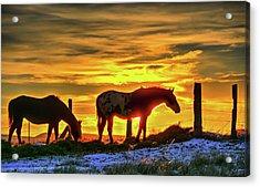 Dawn Horses Acrylic Print