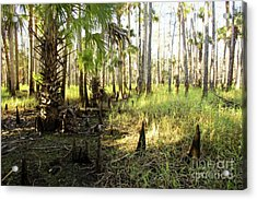 Dawn In The Florida Forest Acrylic Print by Matt Tilghman