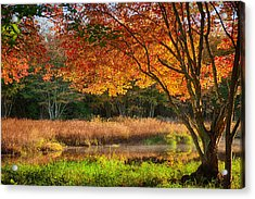 Dawn Lighting Rhode Island Fall Colors Acrylic Print