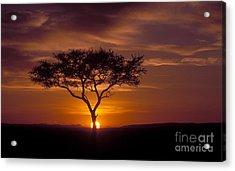Dawn On The Masai Mara Acrylic Print by Sandra Bronstein
