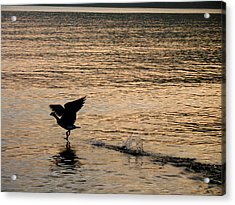 Dawn's First Flight Acrylic Print by Cathy Weaver