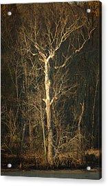 Day Break Tree Acrylic Print