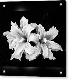 Day Lilies #noir #iphoneonly #iphone6 Acrylic Print