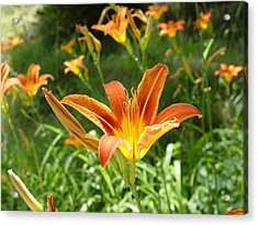 Day Lillies - Standing Tall Acrylic Print by Murtaza Humayun Saeed