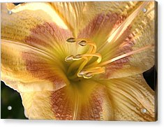 Day Lilly Acrylic Print by Rich Lightfoot