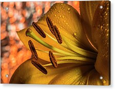 Day Lily Close Up With Abstract Background Acrylic Print
