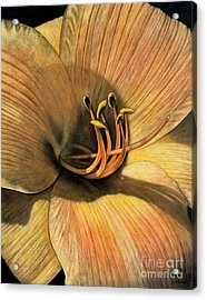 Day Lily Acrylic Print by Lawrence Supino