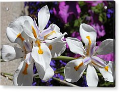 Acrylic Print featuring the photograph Day Lily by M Diane Bonaparte