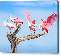 Day Of The Spoonbill  Acrylic Print by Mark Andrew Thomas