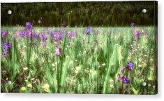 Daydreams In A Meadow Acrylic Print
