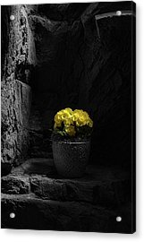 Acrylic Print featuring the photograph Daylight Delight by Tom Mc Nemar
