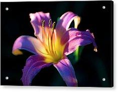 Daylily Glow Acrylic Print by Tamyra Ayles