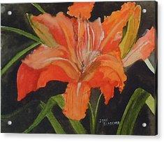 Daylily Study IIi Acrylic Print by Jean Blackmer