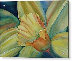 Dazzling Daffodil Acrylic Print
