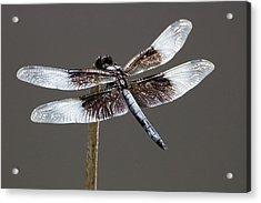 Dazzling Dragonfly Acrylic Print