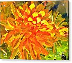 Dazzling Succulent Acrylic Print
