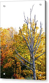 Dead And Dying Acrylic Print by Peter  McIntosh