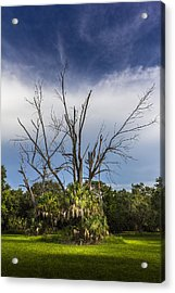 Dead End Acrylic Print by Marvin Spates