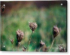Dead Flower Acrylic Print by Simonne Mina