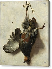 Dead Partridge Hanging From A Nail Acrylic Print