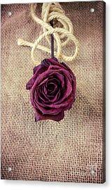 Dead Rose Acrylic Print by Carlos Caetano