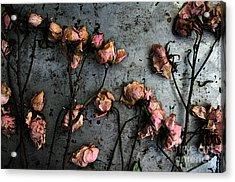 Dead Roses 5 Acrylic Print