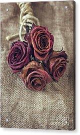 Dead Roses Acrylic Print by Carlos Caetano