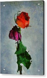 Acrylic Print featuring the digital art Dead Roses by Francesa Miller