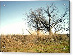 Dead Tree Acrylic Print by Chad Taber