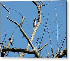 Dead Tree - Wildlife Acrylic Print by Donald C Morgan