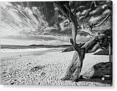 Dead Tree On The Beach Acrylic Print by George Oze