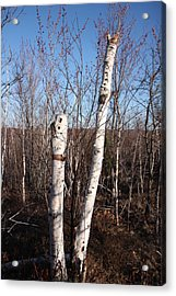 Dead Tree Acrylic Print by Richard Mitchell