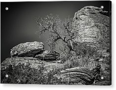 Dead Tree With Boulders Acrylic Print by Joseph Smith
