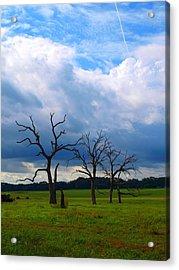 Dead Trees Acrylic Print