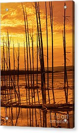 Dead Trees Acrylic Print by Juli Scalzi