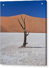 Acrylic Print featuring the photograph Dead Vlei Solo by Rand