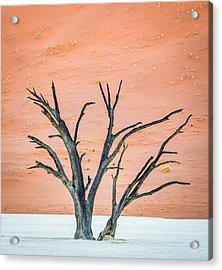 Dead Vlei Tree - Camel Thorn Tree Photograph Acrylic Print