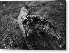 Dead Wood Acrylic Print by Bradley Nichol