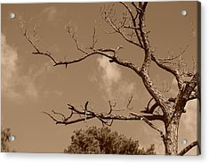 Acrylic Print featuring the photograph Dead Wood by Rob Hans