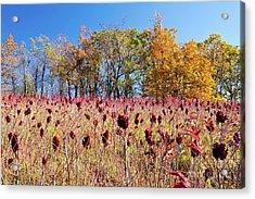 Deadly Beauty In The Blue Ridge Acrylic Print by Dan Carmichael