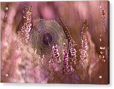Dear Heather - Heath In Bloom Acrylic Print by Roeselien Raimond