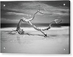 Death Of A Tree Acrylic Print