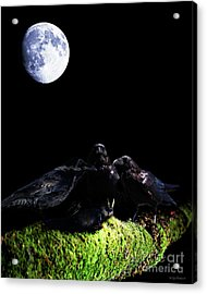 Death Of A Young Raven Acrylic Print by Wingsdomain Art and Photography