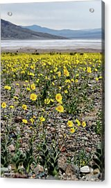Death Valley Super Bloom Acrylic Print